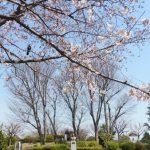 平日の野毛山公園(2017年4月)