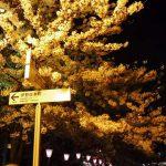大岡川(横浜市) 2017年4月7日 夜間
